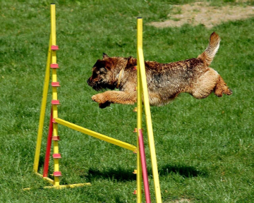 Hund Sprung Pixabay (2)