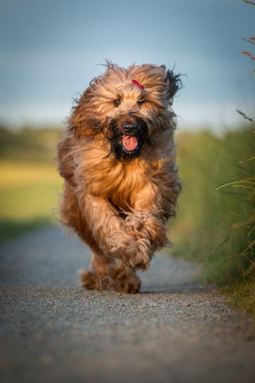 dog-3782257_1280 Hund rennen